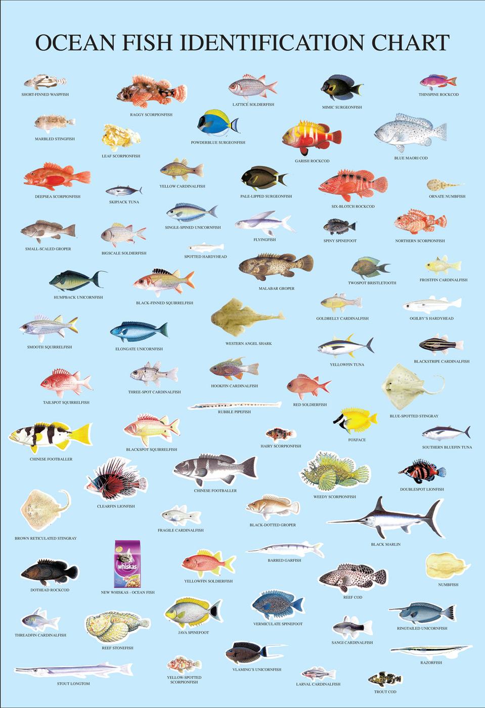 fish chart: Print advert by fish chart ads of the world
