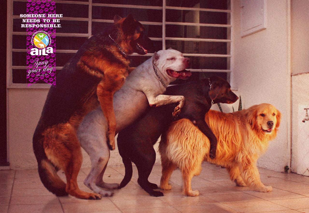 dog world xxx