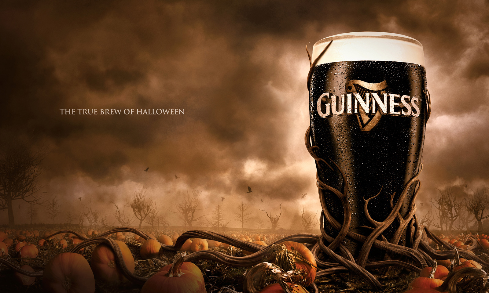 guinness print advert by the marketing store the true brew of