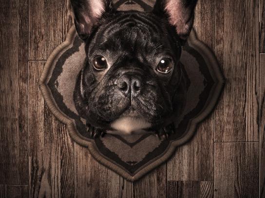 PETA Print Ad - Trophies - Bulldog