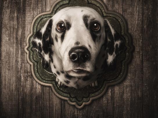 PETA Print Ad - Trophies - Dalmatian