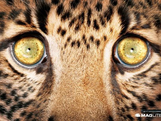 Maglite Print Ad -  Leopard