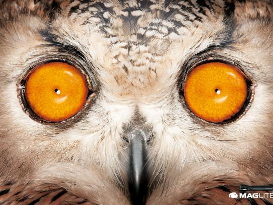 Maglite Print Ad -  Owl