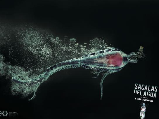 Rain Forest Print Ad -  Bottle, 1