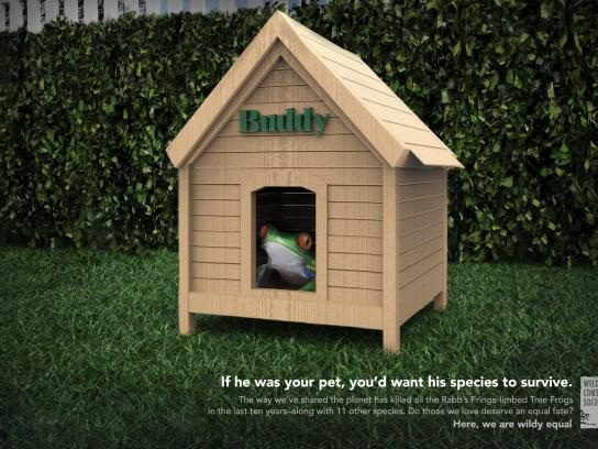 Wildlife Conservation Society Print Ad - Buddy