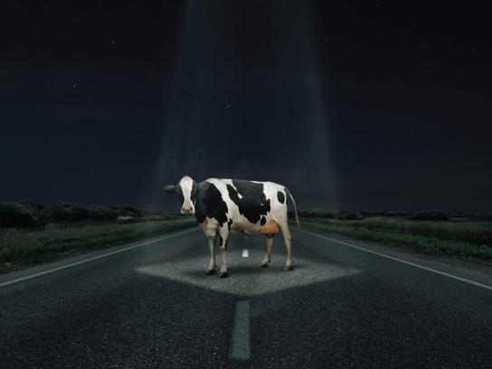 3M Print Ad -  Cow