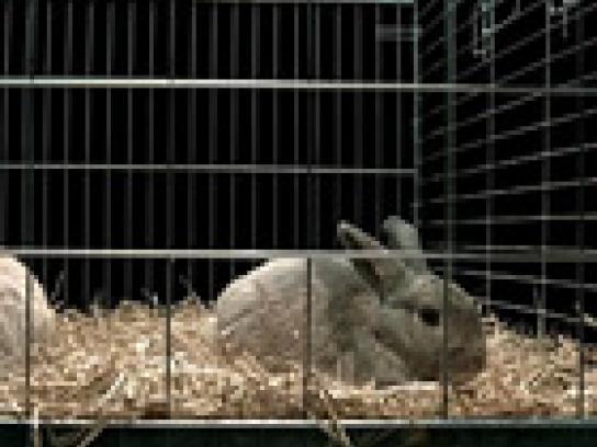 Roy Awards Film Ad -  Rabbits