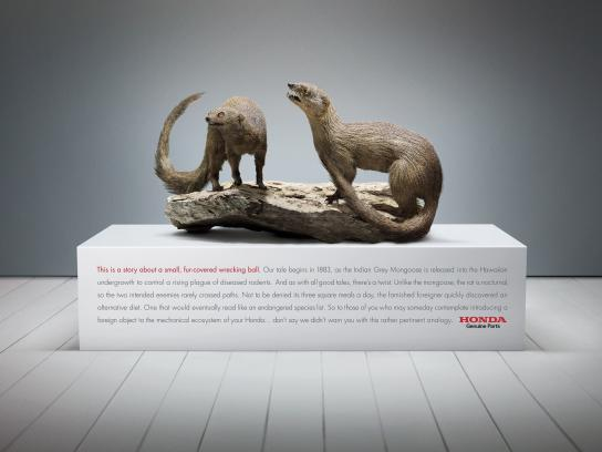 Honda Print Ad -  Indian Mongoose