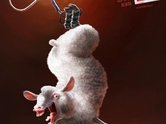 Talidat Print Ad -  Lamb