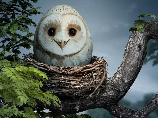 Zoo Cologne Print Ad -  Owl