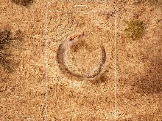 Airtel Print Ad - Cheetah & Gazelle