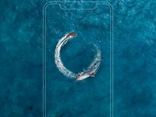 Airtel Print Ad - Shark & Seal