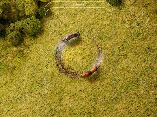 Airtel Print Ad - Lion & Wildebeest