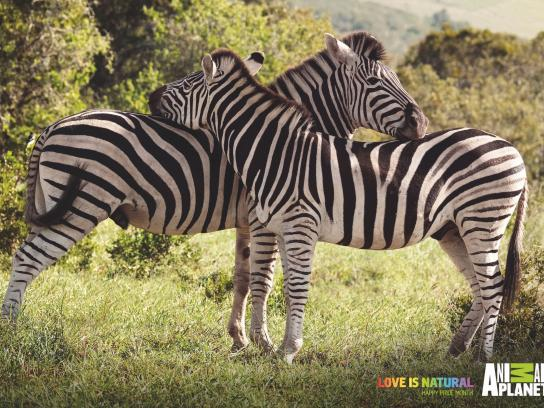Animal Planet Print Ad - Love is Natural - Zebras