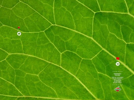 Hortifruti Print Ad - HortiMaps - Cabbage, 1