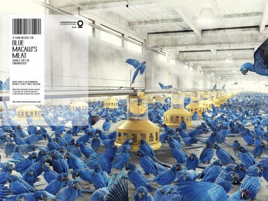 Conservation International Print Ad -  Blue macaw