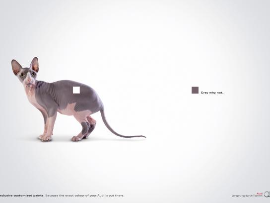 Audi Print Ad -  Cat