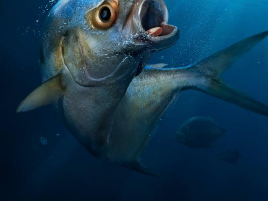 BCF Print Ad -  Scared Fish, 1