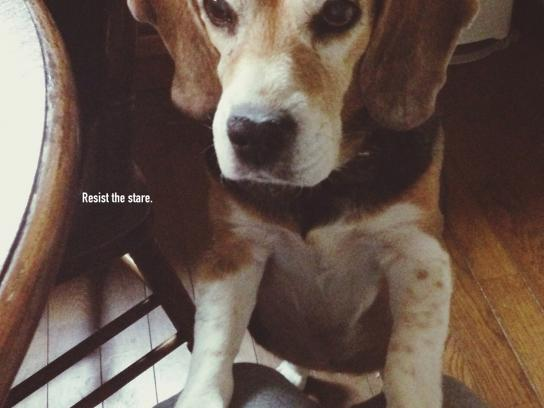 Pedigree Print Ad - Beagle