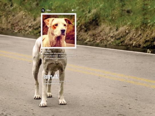 Dallas Pets Alive Print Ad -  Petstagram, #bff