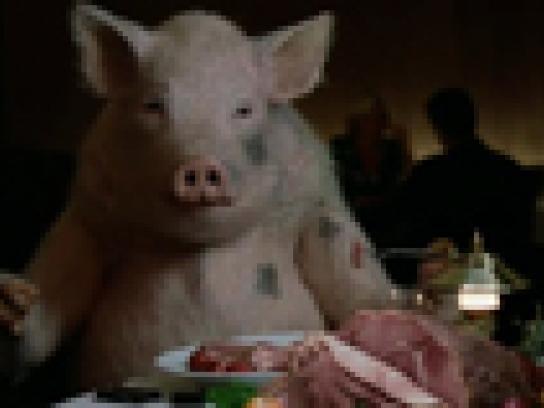 Boost Film Ad -  Pigs