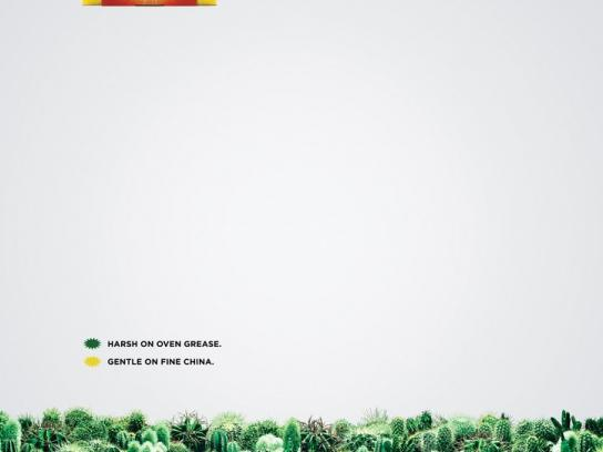 Brax Print Ad -  Cactus Feather