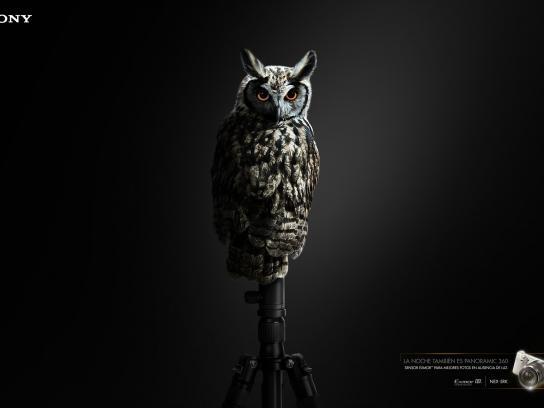 Sony Print Ad -  Owl