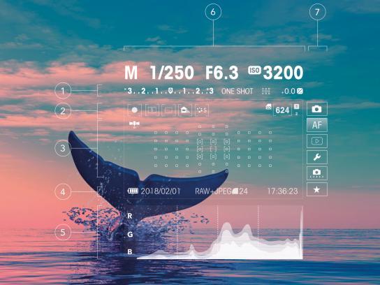 Camara Print Ad - The Whale