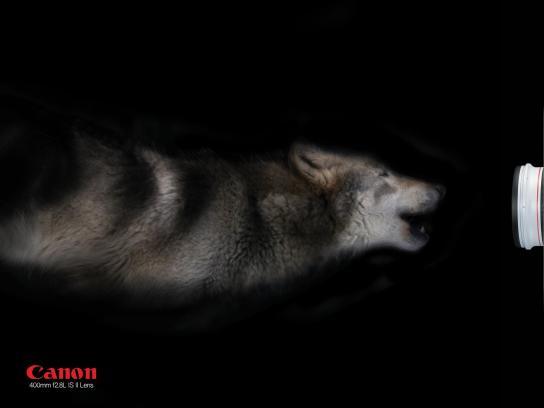 Canon Print Ad -  Wolf