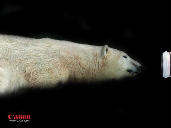 Canon Print Ad -  Polar bear