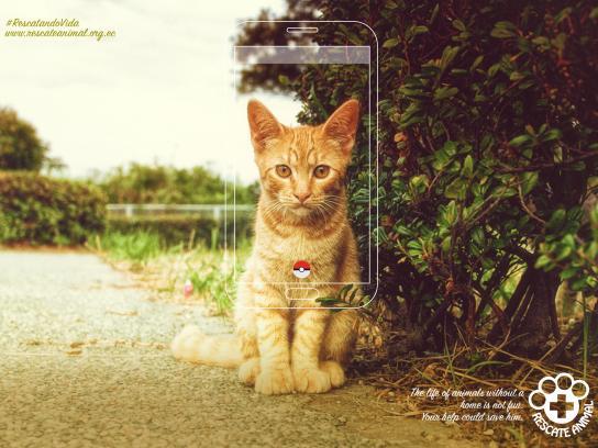 Fundación Rescate Animal Print Ad - Cat