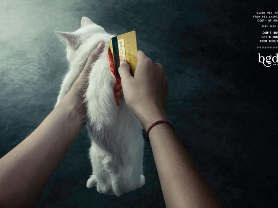 Association of Shelter Volunteers and Animal Rights Istanbul Print Ad -  Cat