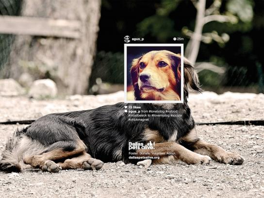 Dallas Pets Alive Print Ad -  Petstagram, #chickmagnet