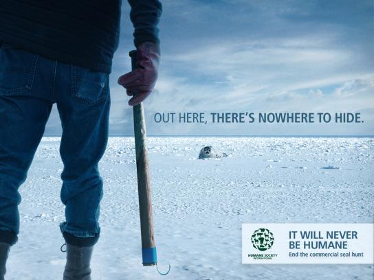 Humane Society International Print Ad - Club
