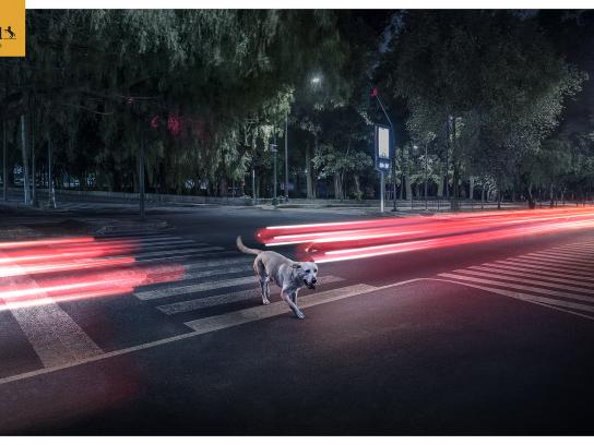 Continental Outdoor Ad - Lights dog