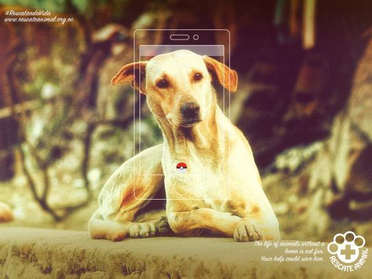 Fundación Rescate Animal Print Ad - Dog, 1