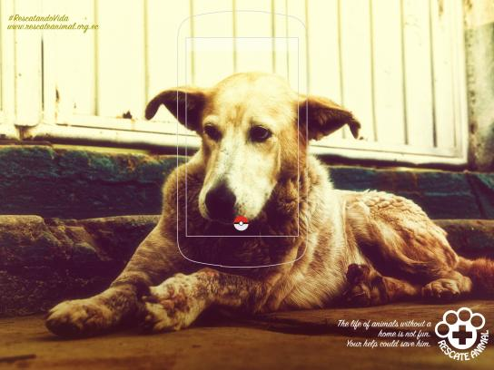Fundación Rescate Animal Print Ad - Dog, 2
