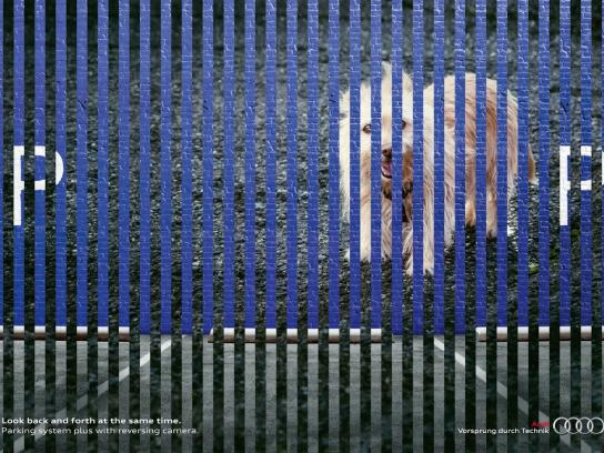 Audi Print Ad -  Back an Forth, Dog