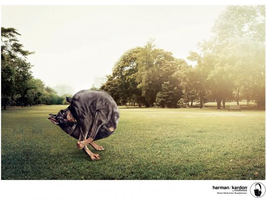 Harman Print Ad -  Dog