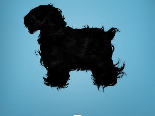 PETS & U Print Ad -  Hair, 2