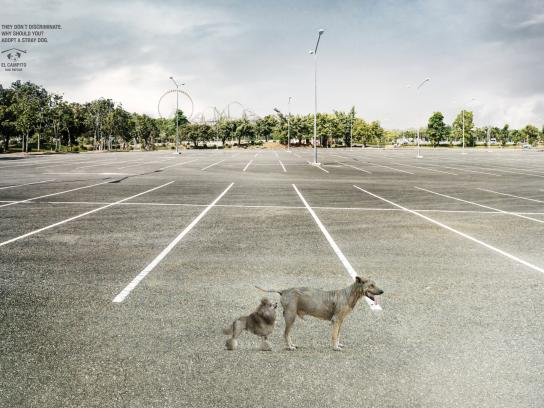 El Campito Dog's Refuge Print Ad - Sniff