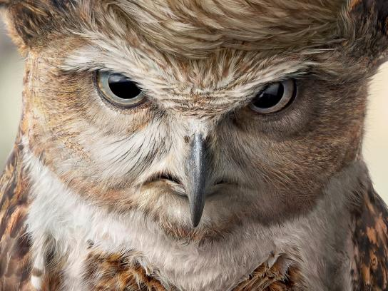 TOP Magazine Print Ad -  Donald Trump