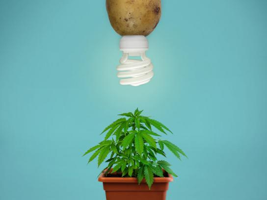 Electric Spud Print Ad - Drugs
