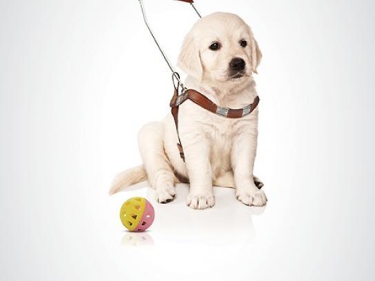 Eliya Print Ad -  Puppy