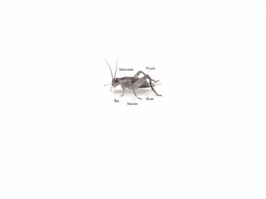 Singularity University Print Ad - Cricket