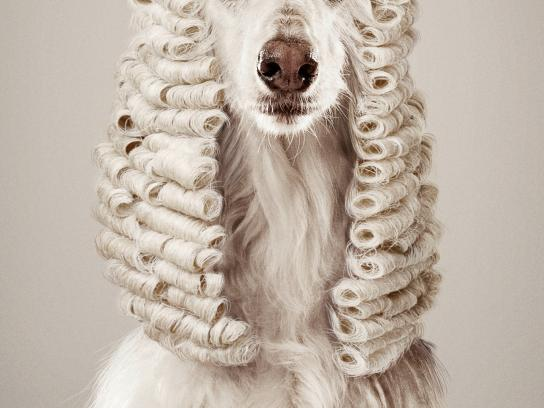 Foundation Animal in the Law Print Ad -  Animal judges, 1