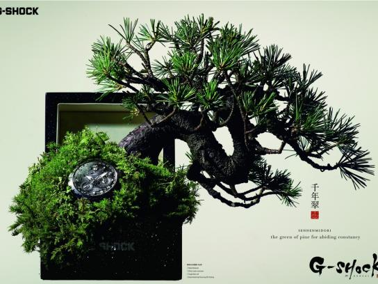 G-SHOCK Print Ad - Bonsai, 1