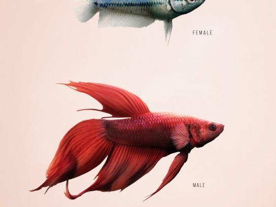 Garage Print Ad -  Fish