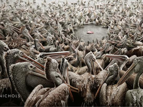 Harvey Nichols Outdoor Ad -  Pelicans