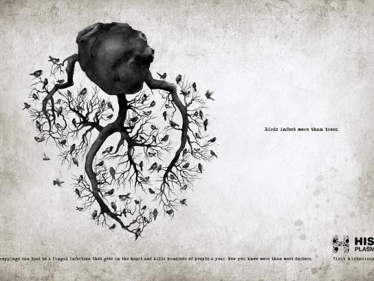 Histoplasmosis Awareness Print Ad -  Heart